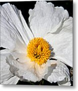 Innocent Krinkle - White Peony By Diana Sainz Metal Print