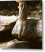 Inquisitive By Nature Metal Print