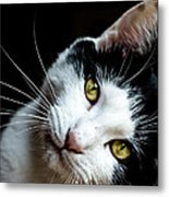 Inquisitive Kitty Metal Print