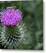 Insect On A Thistle Metal Print