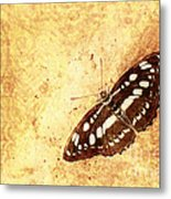 Insect Study Number 66 Metal Print