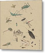 Insects C1825 Metal Print