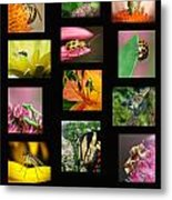 Insects Collage Metal Print