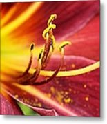 Inside Of A Lily Metal Print