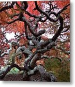Inside The Japanese Maple Metal Print