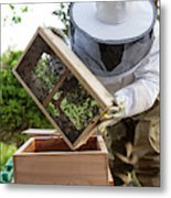 Installing Bees In A Hive Metal Print