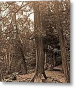 Interesting Tree Metal Print