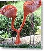 Intertwined Flamingoes Metal Print