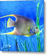 Into Blue - Tropical Fish By Sharon Cummings Metal Print