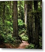 Into The Magical Forest Metal Print