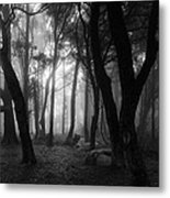 Into The Mystic Metal Print