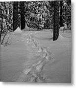 Into The Woods Pisgah Forest Black And White Metal Print