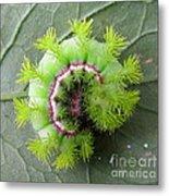 Io Caterpillar Metal Print