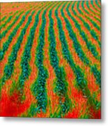 Iowa In August Metal Print