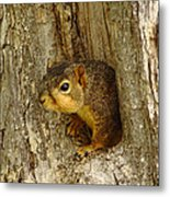 iPhone Squirrel In A Hole Metal Print