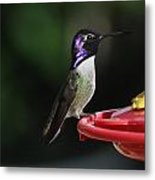 Iridescent Purple Headed Costa Metal Print