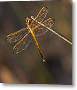 Iridescent Dragonfly Wings Metal Print
