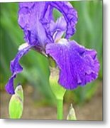 Iridescent Flower Metal Print
