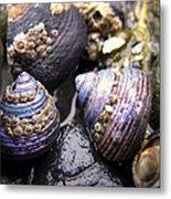 Iridescent Purple Seashells Metal Print