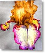 Iris #17 Metal Print