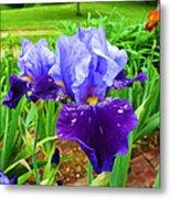 Iris #36 Metal Print