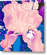 Iris  9 Metal Print