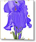Iris And Old Lace Metal Print