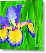 Iris Blossom Metal Print