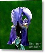 Iris Blues Metal Print