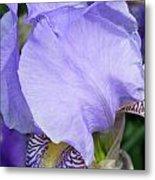Iris Close Up 2 Metal Print