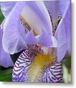 Iris Close Up 3 Metal Print