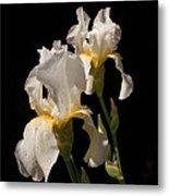 Iris Cream Metal Print