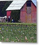 Iris Field And Barn Metal Print