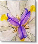 Lily Flower Macro Photography Metal Print