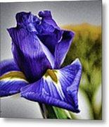 Iris Flower Macro Metal Print