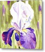 Iris Flower Purple Dance Metal Print