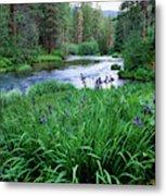 Iris Flowers By The Metolius River Metal Print