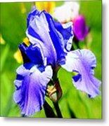 Iris In Bloom Metal Print