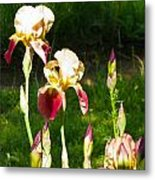 Iris In The Sun Metal Print