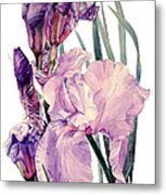 Watercolor Of An Elegant Tall Bearded Iris In Pink And Purple I Call Iris Joan Sutherland Metal Print