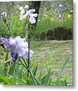 Iris On The Path Metal Print