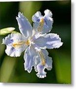 Iris Pacifica Metal Print