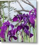 Iris Purple Lavender Metal Print