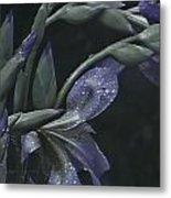 Iris Rain Metal Print
