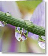 Iris Versicolor Reflection Metal Print