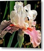 Iris White To Pink Metal Print