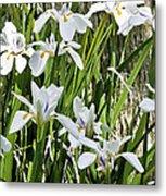 Irises Dancing In The Sun Painted Metal Print