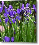 Irises In Spring Metal Print