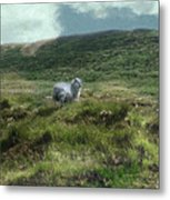 Irish Countryside Metal Print
