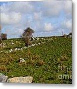 Irish Farms And Fields Metal Print